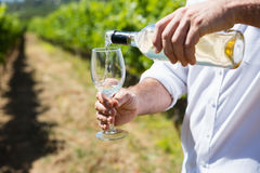 Mid section of vintner examining wine Royalty Free Stock Image