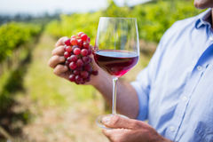 Mid section of vintner holding grapes and glass of wine Royalty Free Stock Photo