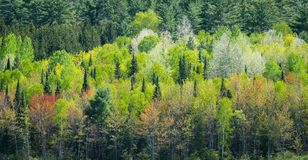 Mid spring forest greening across the lake. Young trees and their leaves bursting with the newness of mid-spring offer up a contrasting array of greens royalty free stock photo