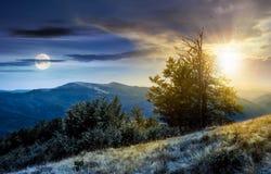 Mida el tiempo del árbol del concepto del cambio en la ladera herbosa Imagen de archivo