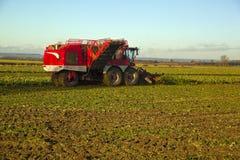 Mida el tiempo para cosechar la remolacha Lincolnshire Fotografía de archivo libre de regalías