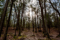 Middag Forest Sunlight Royalty-vrije Stock Afbeelding