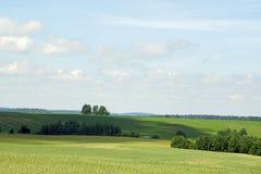Middag i Juni vidder avstånd Härlig sikt av fälten och småskogen på en solig dag fotografering för bildbyråer