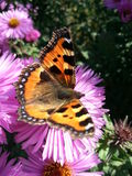 Middag met vlinder Stock Foto's