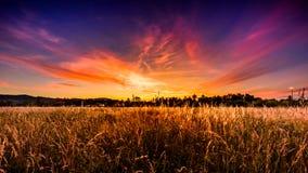 Middaglandschap met mooie zonsondergang op het weide eith lange gras Royalty-vrije Stock Afbeelding