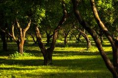 Middagpark met groen gras en zonlicht Stock Foto's