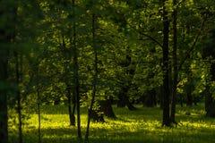 Middagpark met groen gras en zonlicht Royalty-vrije Stock Foto