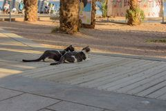 Middagrest straatkatten stock foto's
