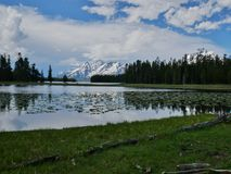 Heron Pond, Grand Teton National Park, Wyoming. Midday cloud and mountain reflection with lilies on Heron Pond in Grand Teton National Park, Wyoming royalty free stock photos