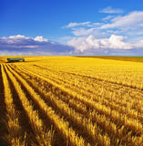 The midday on fields of Montana Stock Photography