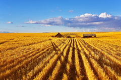 The midday on fields of Montana Royalty Free Stock Photo