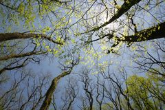 Ultra-wide angle view of golden sunlight in treetops stock photos