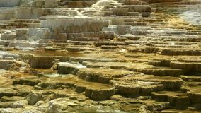 Midday panning shot of mound spring at mammoth hot springs in yellowstone national park