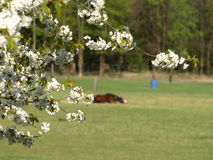 Midday Rest. Rest in a cow pasture. Photos in the spring, awakening nature. Photos Royalty Free Stock Photography