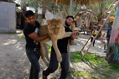 The zoo in Rafah gives visitors a chance to play with animals in the Gaza Strip royalty free stock photo