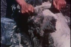 Middel van handen wordt geschoten die bont schaven van karkas dat stock footage