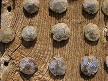 Middeleeuws poortdetail Stock Fotografie
