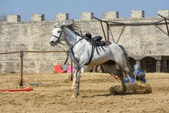 Middeleeuwse de ridderstoernooien van Transsylvani? in Roemeni? royalty-vrije stock foto's
