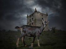 Middeleeuwse geheimzinnige geit stock foto