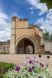 Middeleeuwse poort en bloeiende violette tulpen Stock Foto's