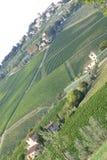 Middeleeuwse stad en wijngaarden Stock Afbeelding