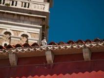 Middeleeuwse stad Piran Royalty-vrije Stock Foto's