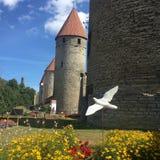 Middeleeuwse stad van Tallinn in Estland stock foto