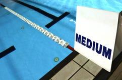 Middelgroot steegteken in zwembad Royalty-vrije Stock Foto's