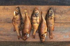 Middelgrote die vissentoppositie in een kleine rivier wordt gevangen Royalty-vrije Stock Afbeeldingen