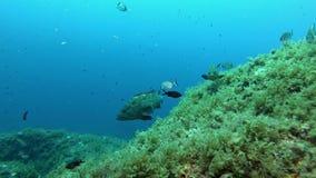 Middellandse Zee ertsaderscène - Vrij duiken in Majorca stock footage