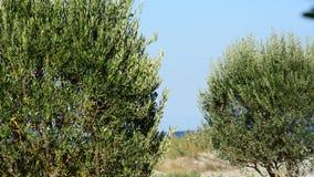 Middellandse Zee, installaties, aard en het milieu stock video