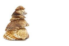 Middellandse Zee shells Stock Afbeelding