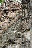 Midden-Amerika, Mayan ruïnes van Copan in Honduras Royalty-vrije Stock Foto's