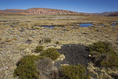 Midden in Lauca National Park, Chile Stock Photography