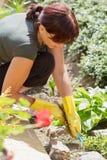 Midden leeftijdsvrouw die in zonnige dag tuiniert Royalty-vrije Stock Afbeeldingen