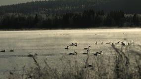 Midden van de winterrivier in vroege ochtend Stock Foto's