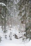 Midden van een diep bos Stock Afbeelding