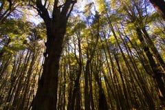 Midden van het bos Stock Afbeelding