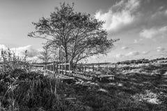 Middenbrug, Combe-Vallei, Oost-Sussex, Engeland royalty-vrije stock foto's