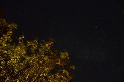 middernacht Stock Afbeelding
