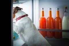 Middernacht hongerige hond Royalty-vrije Stock Afbeelding