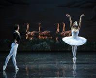 Middernacht terug in een het oever van het meer-Ballet van Ojta-The Swan van de zwaanprinses Zwaanmeer dat wordt veranderd royalty-vrije stock foto's