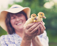 Middle age caucasian woman with yellow duckling outdoors Stock Image