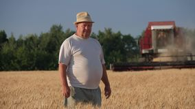 Middle age farmer looking at camera, combine harvesting wheat plants in the golden wheat field. Middle age farmer looking at camera, combine harvesting wheat stock video