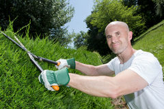 Middle-age man grass cutting in garden stock photo