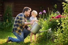 Middle age man and his little son watering flowers in the garden at summer sunny day. Middle age men and his little son watering flowers in the garden at summer stock photography