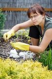 Middle age woman gardening in sunny day Stock Image