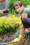 Middle age woman gardening in sunny day Royalty Free Stock Image