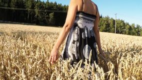 Middle aged beauty woman in a summer dress walking in countryside stock video
