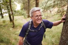 Middle aged Caucasian man taking a break during a hike, leaning on a tree in a forest, waist up royalty free stock photo